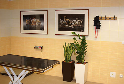 Pohled do ordinace Veterinární ordinace v Šenově